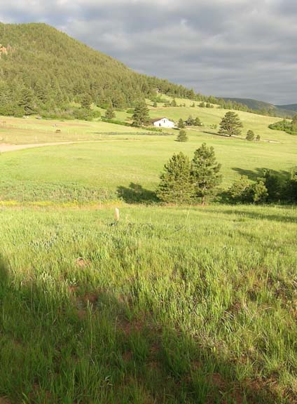 Larkspur Colorado Mountain Horse Property Easy Commute To